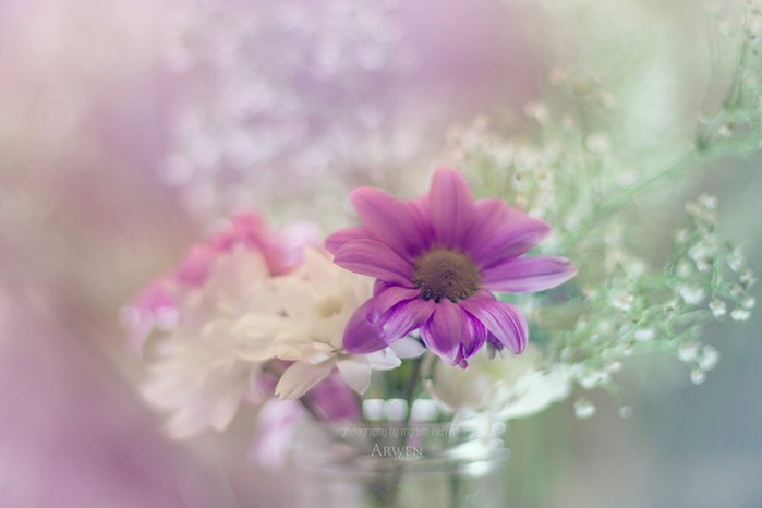 красивые фото цветов Myriam Kieffer 3 (700x466, 44Kb)