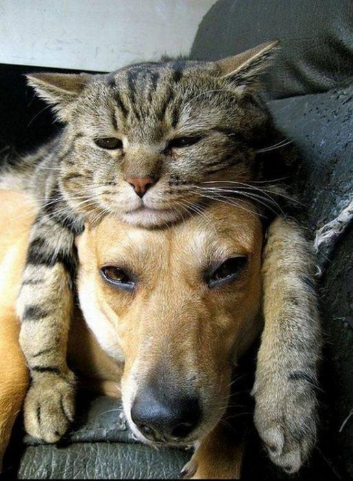 Смешные фотографии с животными 4 (514x700, 364Kb)
