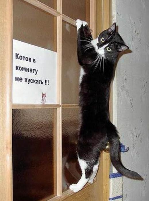 Смешные фотографии с животными 8 (519x700, 266Kb)