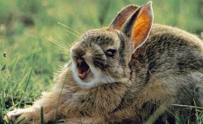 Смешные фотографии с животными 10 (700x428, 97Kb)