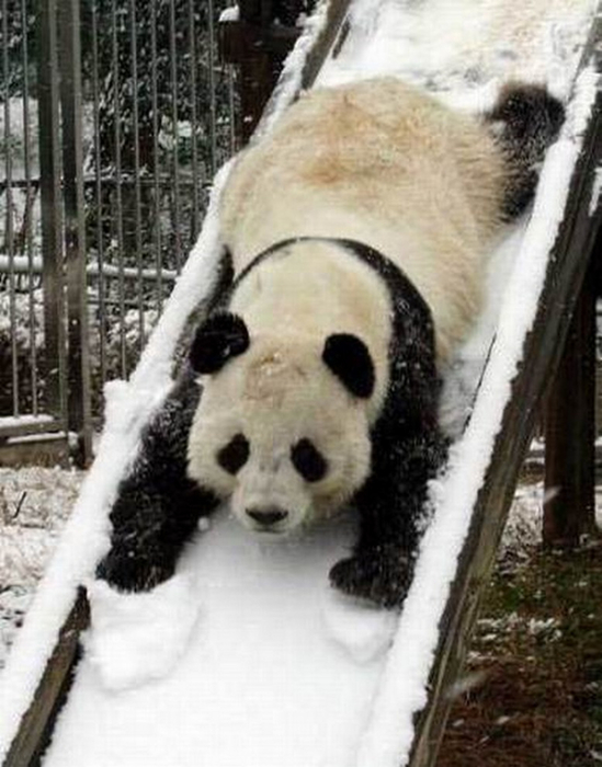 Смешные фотографии с животными 14 (549x700, 287Kb)