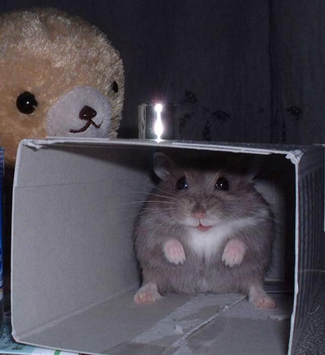 Смешные фотографии с животными 18 (641x700, 76Kb)