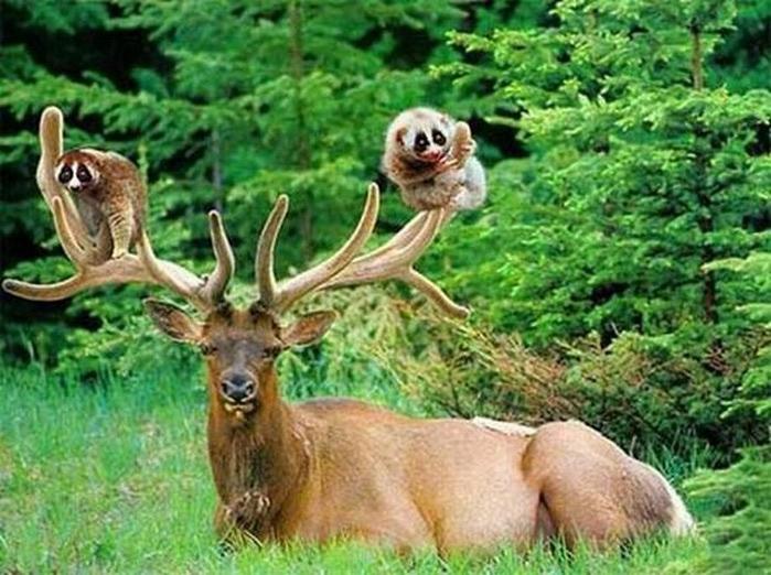 Смешные фотографии с животными 19 (700x522, 122Kb)