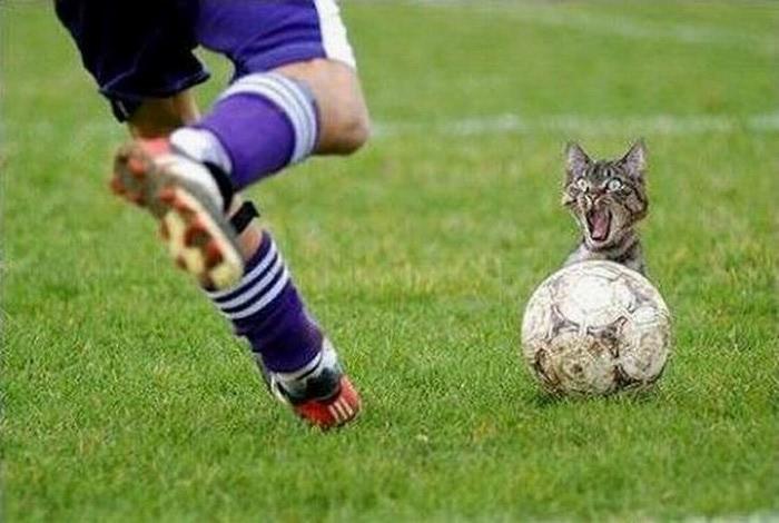 Смешные фотографии с животными 20 (700x470, 80Kb)