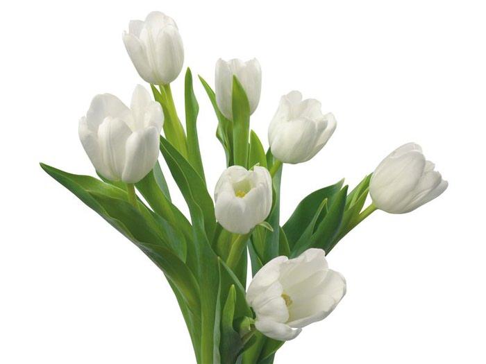 Картинки цветы тюльпаны скачать 6