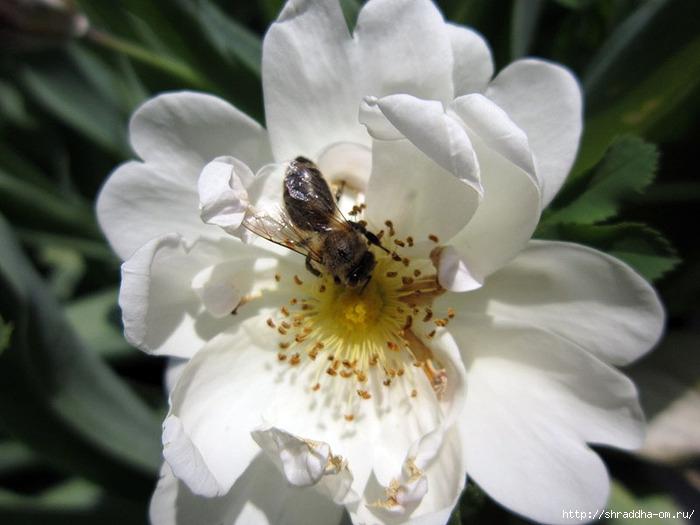 цветы, дача, 1 (700x525, 176Kb)