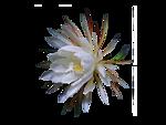 0_8ea1d_1ddaf939_S (150x113, 18Kb)