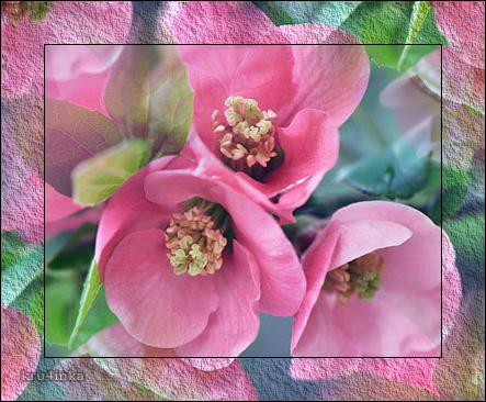 Розовые-цветы (443x366, 291Kb)