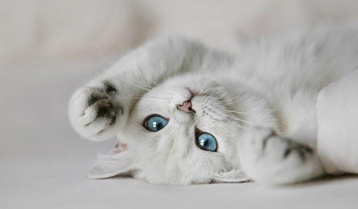 1337114539_white_cat_1 (700x410, 32Kb)