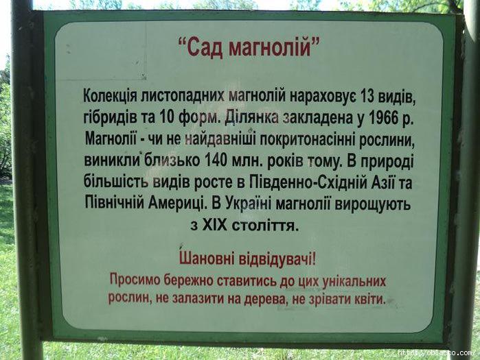 магнолии киев ботсад 2012