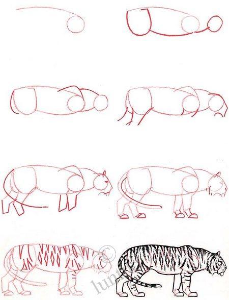 Сейчас мы расскажем о том, как нарисовать тигра карандашом поэтапно.  Для начала выберите понравившуюся фотографию...