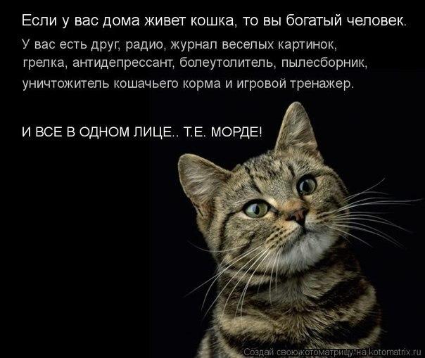 если у вас живёт кошка (604x509, 54Kb)