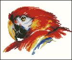 Превью Vervaco 70.147 Parrot (360x300, 93Kb)