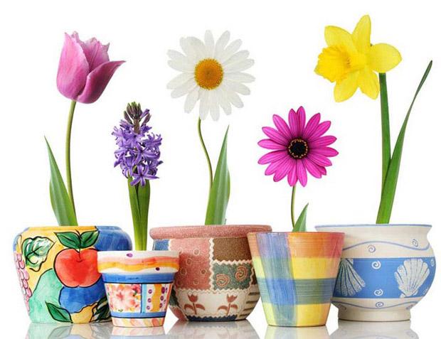 Этапы роста цветка в картинках 2