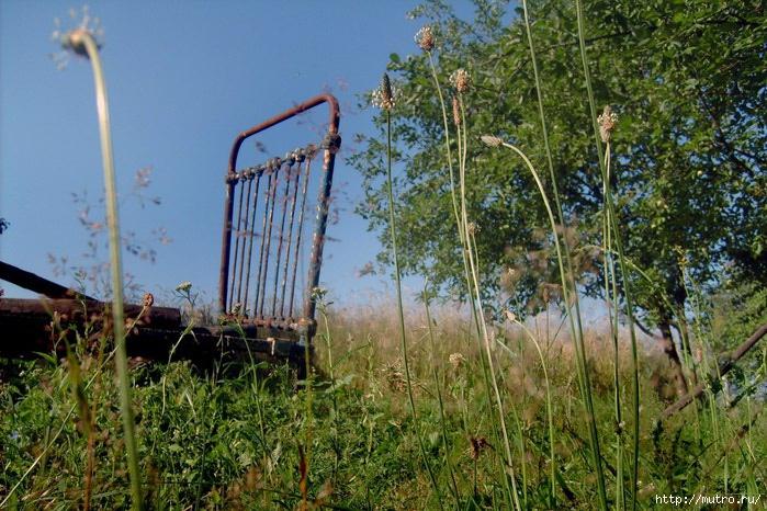 трава, кровать, старая фота