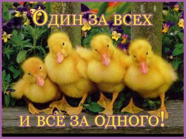3387964_Dryzya_ytyata_k (598x450, 90Kb)