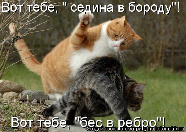 87351624_kotomatrix_15.jpg