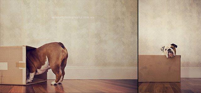 прикольные фото собак 1 (640x297, 36Kb)