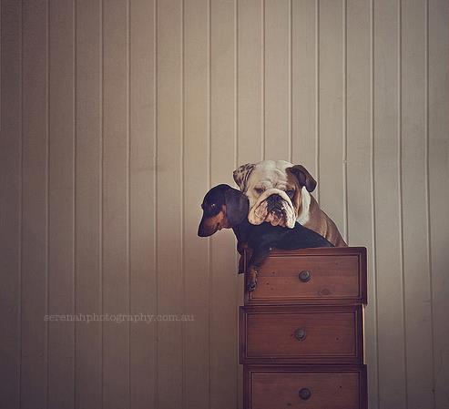 прикольные фото собак 9 (493x449, 22Kb)