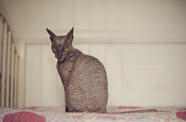 прикольные фото кошек 3 (640x422, 25Kb)