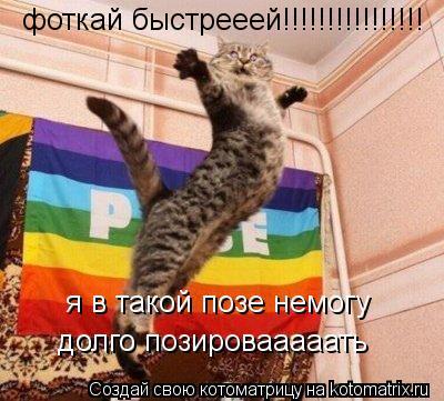 85083251_Kotomatrica_fotoprikoluy_3[1] (400x361, 38Kb)