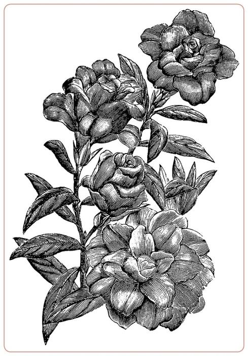 rosev (1) (489x700, 197Kb)