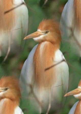 birds_1_077 (318x448, 20Kb)