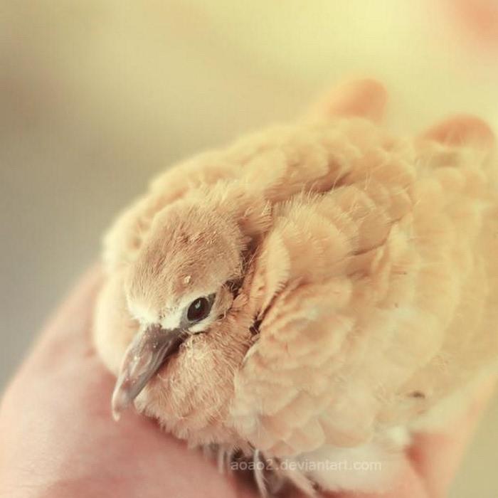 Милые животные - фото Essa Al Mazroee 7 (700x700, 60Kb)