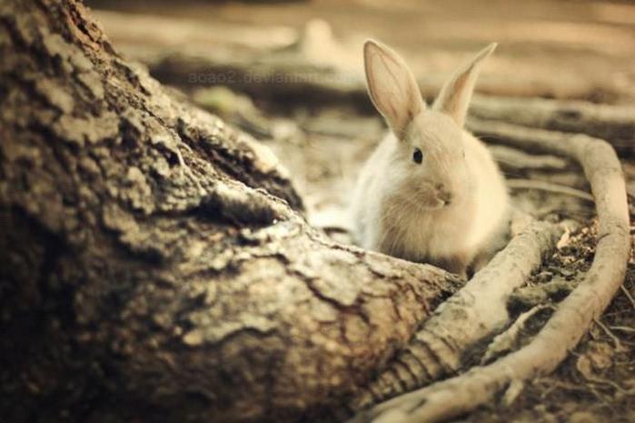 Милые животные - фото Essa Al Mazroee 13 (700x465, 74Kb)