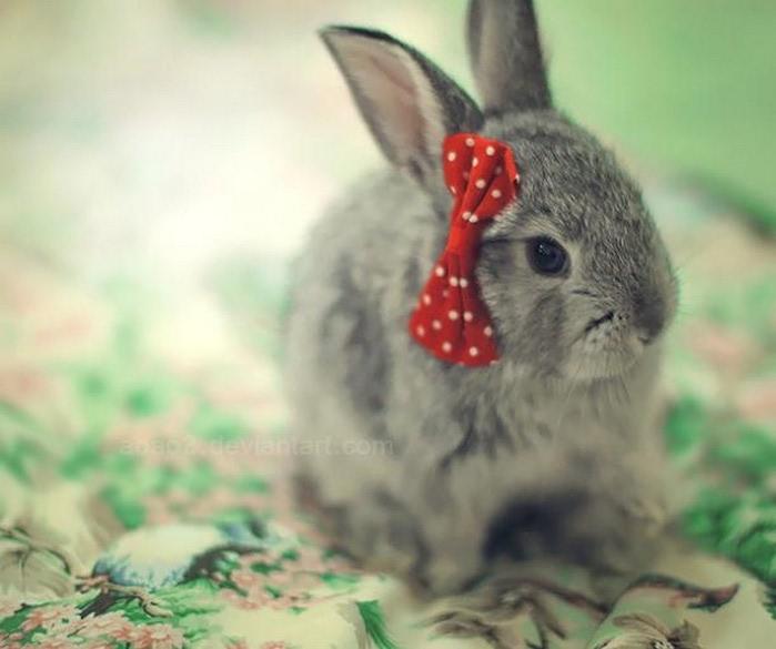 Тэги животные милые животные фото