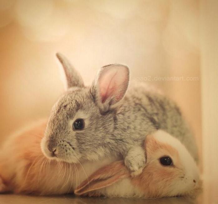 Милые животные - фото Essa Al Mazroee 19 (700x654, 61Kb)