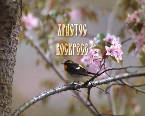 - - - Pascha_2012 (600x480, 35Kb)