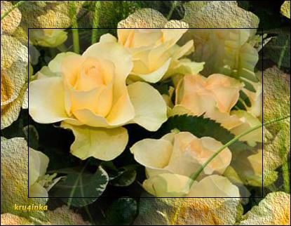 желтые-розы (415x322, 242Kb)