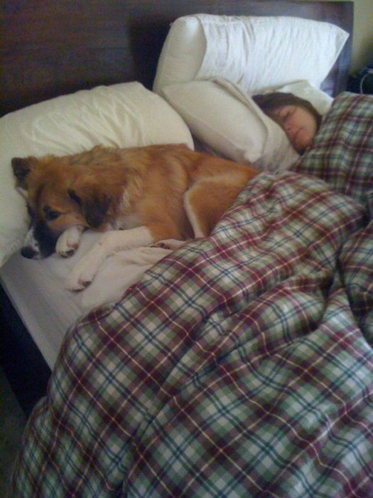 4829436_sleep_dog_02 (525x700, 59Kb)