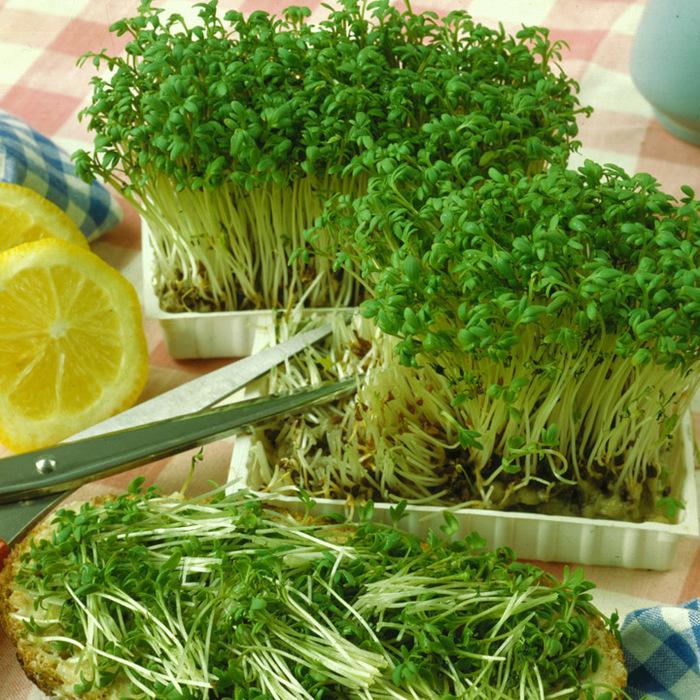 Виды зеленых салатов