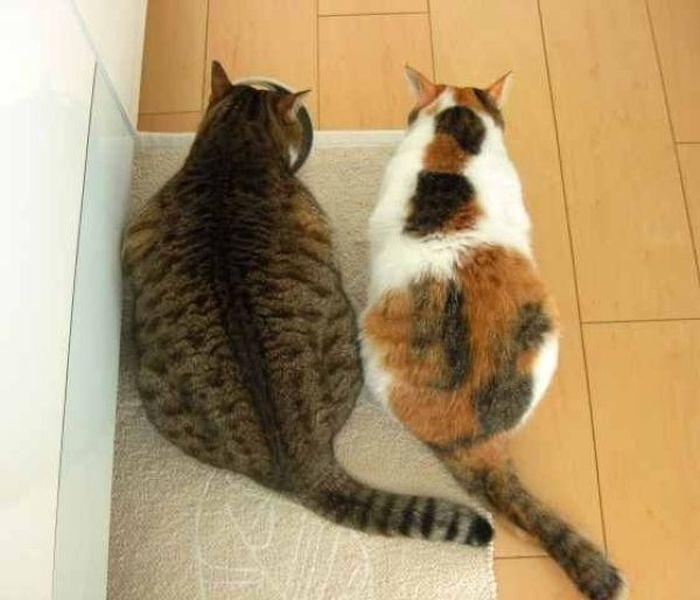fat_cats_02 (700x600, 48Kb)
