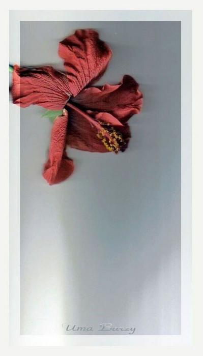 Сканография - фотография без фотоаппарата 28 (399x700, 176Kb)