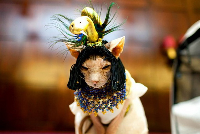 одежда для кошек фото 1 (680x457, 87Kb)