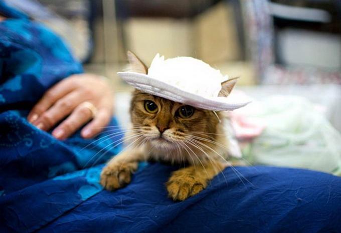 одежда для кошек фото 3 (680x465, 86Kb)