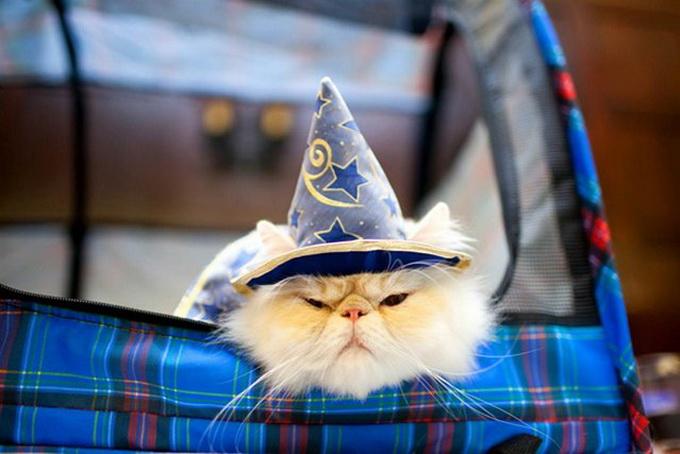 одежда для кошек фото 7 (680x454, 93Kb)