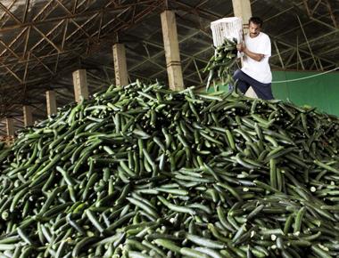 cucumbers (380x290, 165Kb)