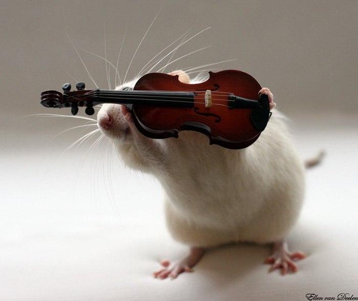смешные крысы фото 7 (700x588, 41Kb)