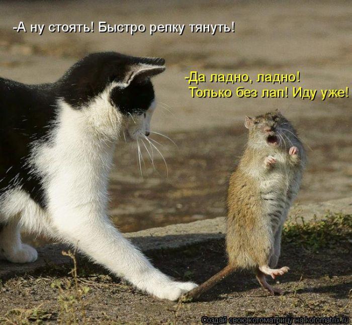 кот и мышь (700x646, 86Kb)