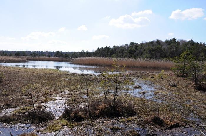 природный парк Дюбенская пустошь -и бобры. 59769