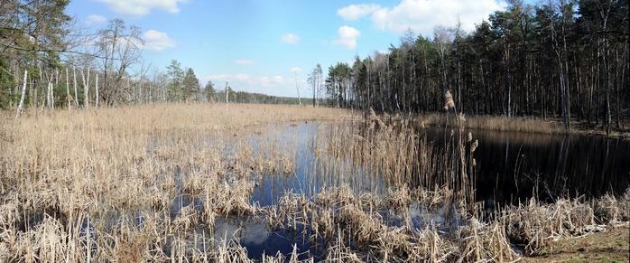 природный парк Дюбенская пустошь -и бобры. 51995