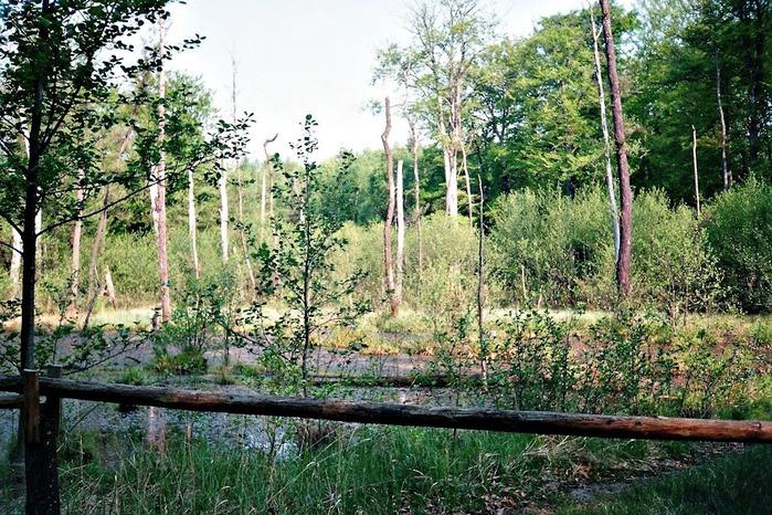 природный парк Дюбенская пустошь -и бобры. 92568