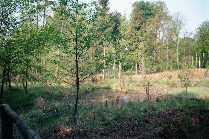 природный парк Дюбенская пустошь -и бобры. 73377