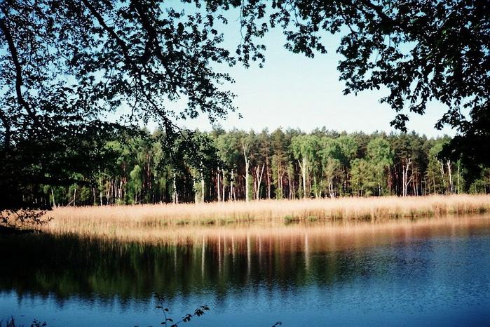 природный парк Дюбенская пустошь -и бобры. 77004