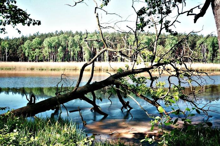 природный парк Дюбенская пустошь -и бобры. 17975