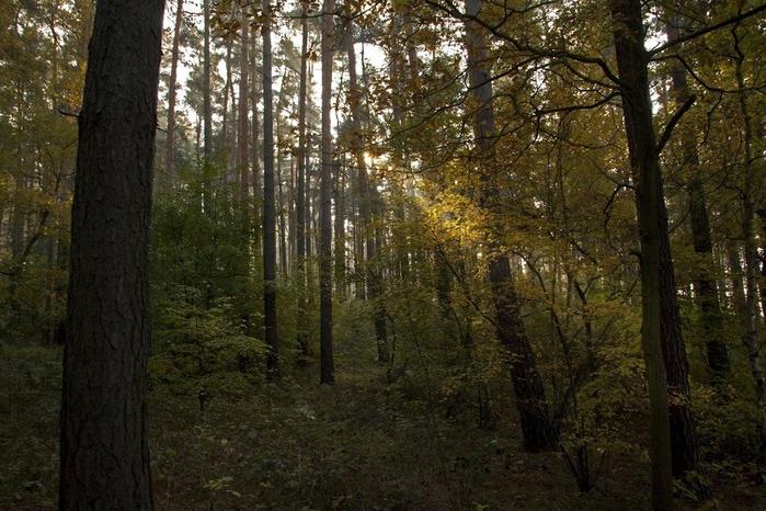 природный парк Дюбенская пустошь -и бобры. 46782